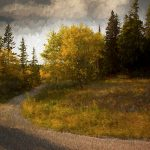 Original Photographs by Master photographer Peter Gold from Arts In Bragg Creek