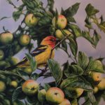 Western Tanager original acrylic painting by Canadian artist Darren Haley