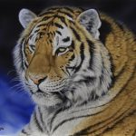 Siberian Tiger original acrylic painting by Canadian artist Darren Haley