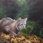 The Stalk Bobcat original acrylic painting by Canadian artist Darren Haley