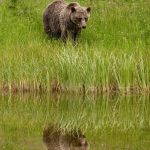 Angelo Avlonitis is a Canadian nature photographer from Bragg Creek Alberta part of the Arts In Bragg Creek