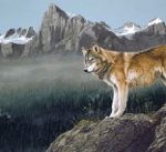 High Country Wolf by Canadian artist Darren Haley